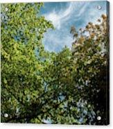 Folhas De Outubro Acrylic Print