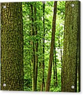 Footpath Between The Trees Acrylic Print