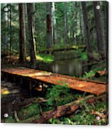 Forest Foot Bridge Acrylic Print