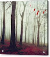 Forest In December Mist Acrylic Print