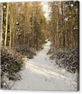 Forest Track In Winter Acrylic Print