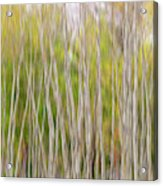 Forest Twist And Turns In Motion Acrylic Print