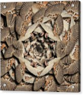 Forms Of Nature #16 Acrylic Print