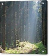 Forrest And Sun Acrylic Print