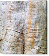 Foster Trees 4 Acrylic Print