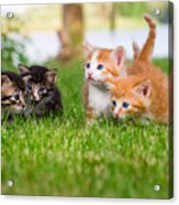 Four Little Kittens Playing In Garden Acrylic Print