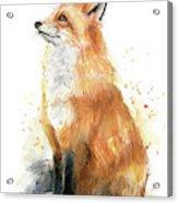Fox Watercolor Acrylic Print