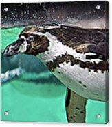Freestyle Swimming Acrylic Print