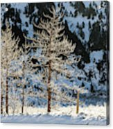 Frost Covered Trees On The Portage Glacier Highway Alaska Acrylic Print