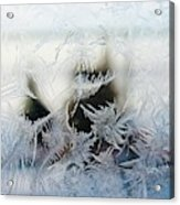 Frost From Canada Acrylic Print