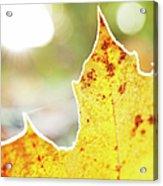Frost On Autumn Leaf, Detail Acrylic Print