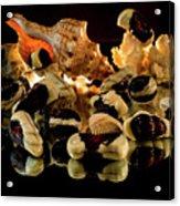 Frutti Di Mare Acrylic Print