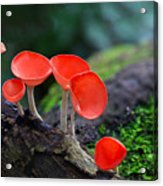 Fungi Cup Red Mushroom Champagne Cup Acrylic Print