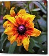 Garden Gem Acrylic Print
