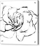 Gardenia Paint My Sketch Acrylic Print