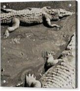 Gator  Park Residence Acrylic Print
