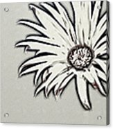 Gerbera Flower Shape Acrylic Print