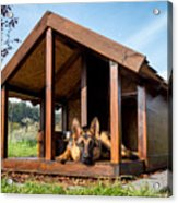 German Shepherd Resting In Its Wooden Acrylic Print