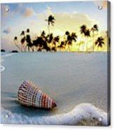 Gili Shell Acrylic Print