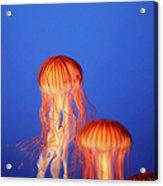 Glowing Jellyfish Under Water Acrylic Print