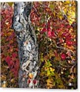 Gnarled Tree Trunk - Dezadeash Lake - Yukon Territory  Acrylic Print