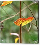 Gold Leaves And Branches Acrylic Print