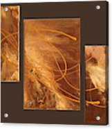Wings Of Gold Brown Bckgrnd Acrylic Print