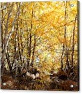 Golden Autumn Light Acrylic Print