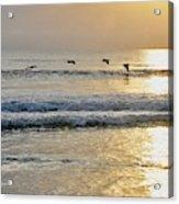 Golden Daybreak Acrylic Print