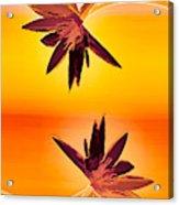 Golden Duo Water Lilies Acrylic Print