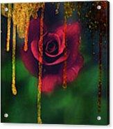 Golden Moments Of A Garden Rose Acrylic Print