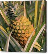 Golden Pineapple Acrylic Print