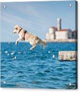 Golden Retriever Dog Jumping Into Sea Acrylic Print