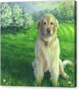 Golden Retriever Acrylic Print