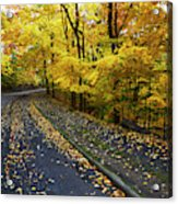 Golden Road Acrylic Print