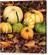 Gourds Grounded Acrylic Print