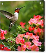 Graceful Garden Jewel Acrylic Print