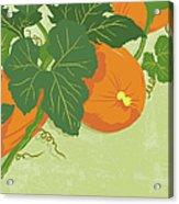 Graphic Illustration Of Pumpkins Acrylic Print