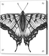 Graphite Illustration Of A Beautiful Acrylic Print