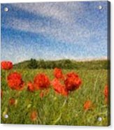 Grassland And Red Poppy Flowers 3 Acrylic Print