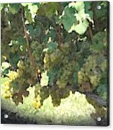 Green Grapes On The Vine 17 Acrylic Print