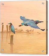 Green Heron Sunrise Acrylic Print