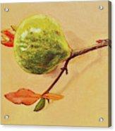 Green Pomegranate Acrylic Print