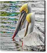 Greeting Party Acrylic Print