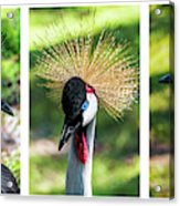 Grey Crowned Crane Gulf Shores Al Collage 2 Triptych Acrylic Print