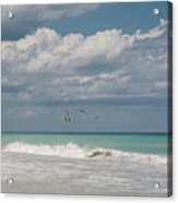 Group Of Pelicans Above The Ocean Acrylic Print