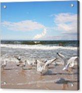 Group Of Seagulls Ower Sea Acrylic Print