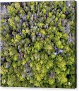 Grove Of Pines Aerial Acrylic Print