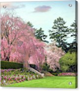 Weeping Cherry And Tulips Acrylic Print