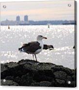Gull Isle II Acrylic Print